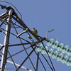 22 June 2013 Female Peregrine on nearby electricity pylon