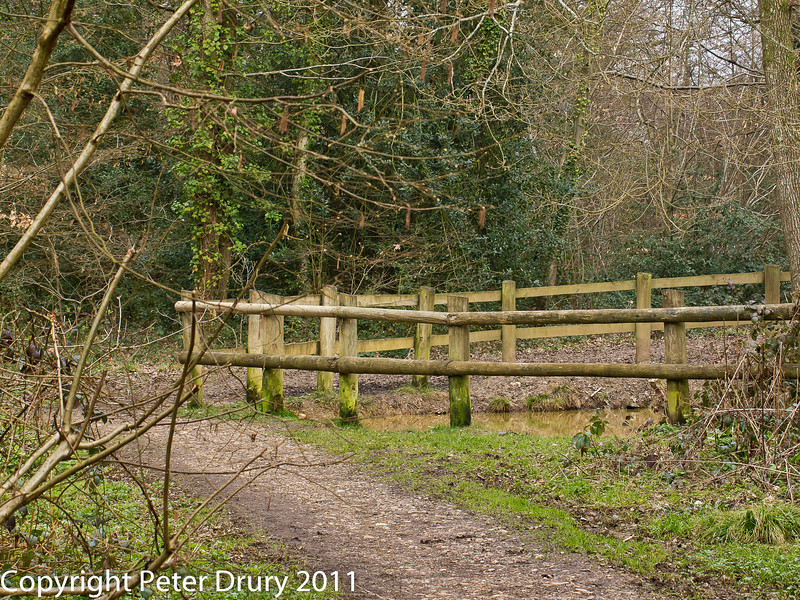 16 March 2011. Forest Trail.  Copyright Peter Drury 2011<br /> The pond at the north side of the forest