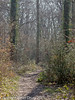 08 March 2011. Forest Trail in the Queens inclosure, Cowplain. Copyright Peter Drury 2011