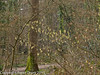 16 March 2011. Forest Trail.  Copyright Peter Drury 2011<br /> Catkins