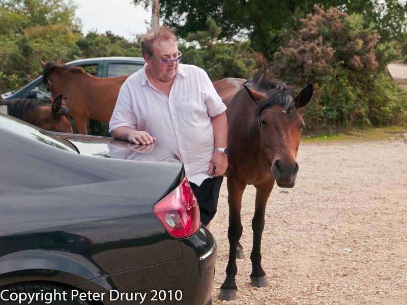 16 Aug 2010 - The ponies. Copyright Peter Drury 2010