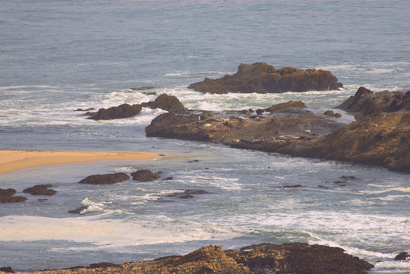 A few seals on the rocks...(kinda far away)