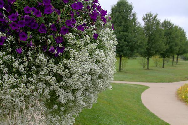 Cox Arboretum  8-9-2013