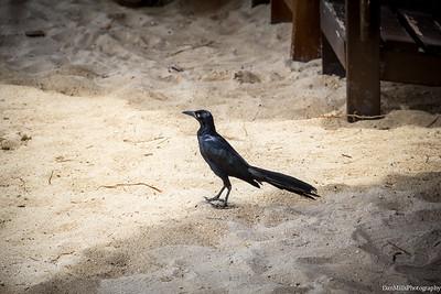 Coz_Bird1