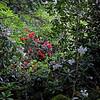 Cragside Gardens