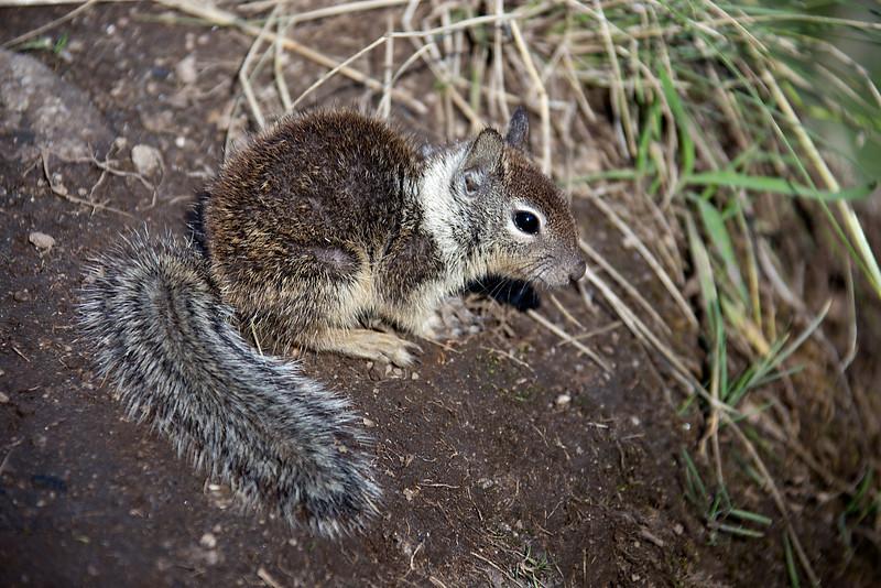 Squirrel On Mist Trail - Yosemite National Park