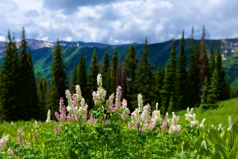 Crested Butte 115