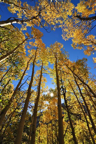 Colorado Fall 1