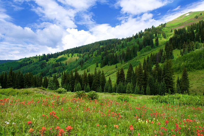 Crested Butte 205