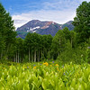 Crested Butte 348