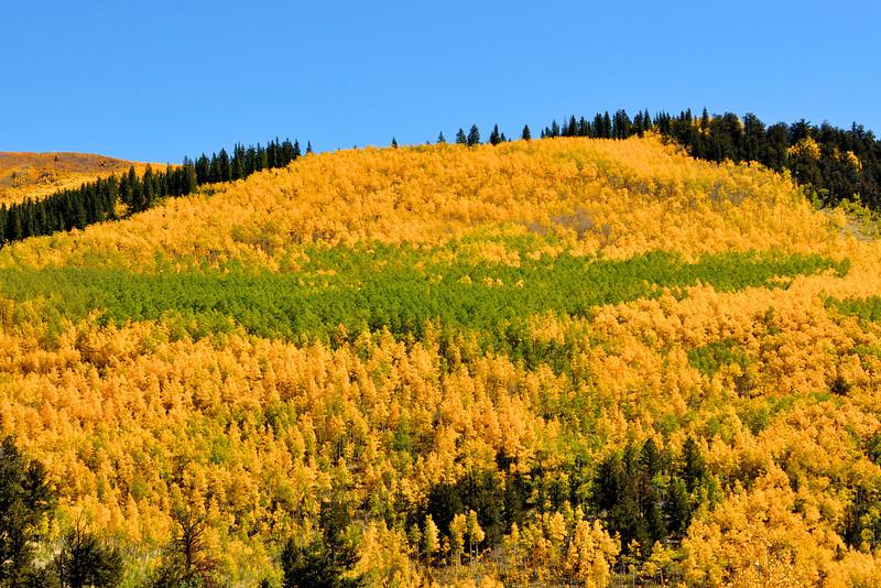 Colorado Fall 25
