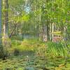 Cypress Gardens Spring
