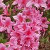 Spring at Cypress Gardens