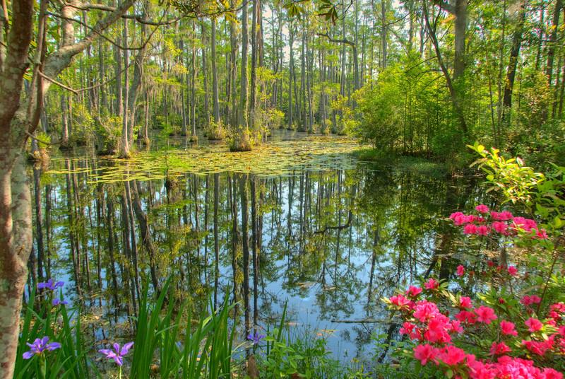 Cypress Garden in Spring