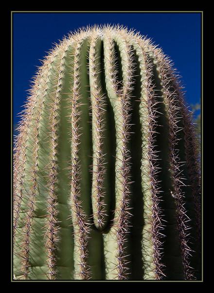 Cactus, Arizona...