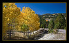 Fall aspens turning..., Utah...