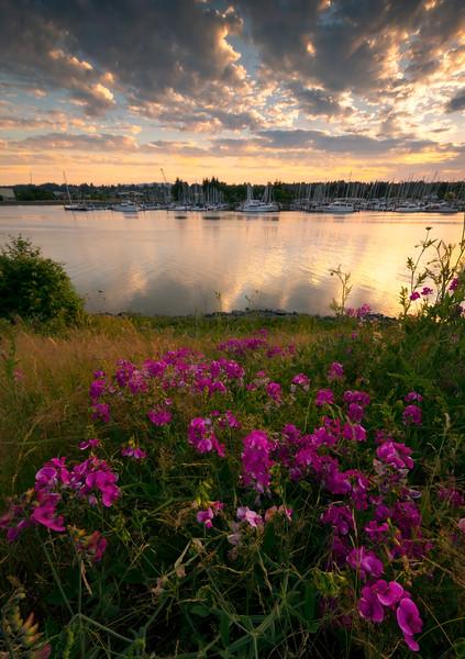 Sunset Pinks Over Olympia Marina
