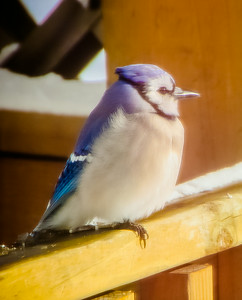 Dad's Birds