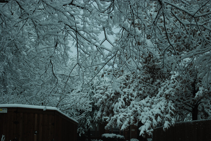 """A record single day snow in Dallas - 12.5"""" before it was all said and done (2-11-10)."""