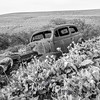 54  G Lupine and Balsamroot Abandoned Car BW