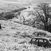 76  G Lupine and Balsamroot Abandoned Car BW