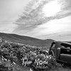 13  G Lupine and Balsamroot Abandoned Car Clouds BW