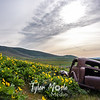 11  G Lupine and Balsamroot Abandoned Car Clouds