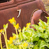 59  G Lupine and Balsamroot Abandoned Car Handle Close