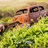 52  G Lupine and Balsamroot Abandoned Car
