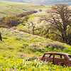 75  G Lupine and Balsamroot Abandoned Car