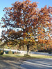 Fall colors November 4, 2006