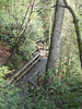 Another view of the stairs into the gorge.  Wonderful views of native plant life.