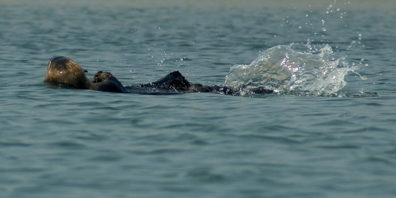 Elkhorn Slough Monterey Bay, Califronia