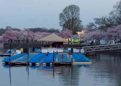 Paddle boats and blossoms at dawn.