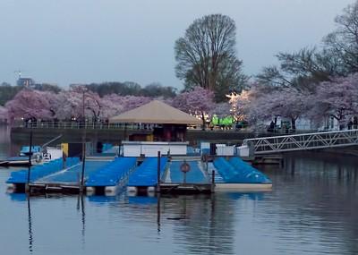 Paddle boats and blossoms at dawn.