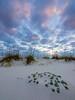 Pensacola Dunes Sunset