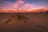 death valley-mesquite dunes-8752