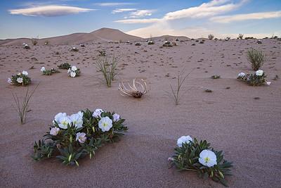 eureka dunes-3113_17fs2