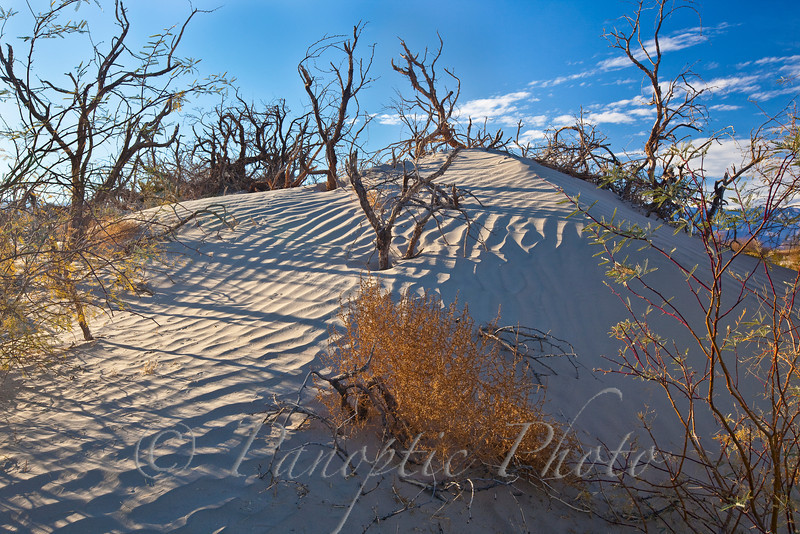Mesquite in Sand Dunes, Death Valley National Park, California