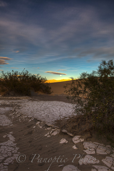 Clinging Trees in Sand Dunes, Death Valley National Park, California