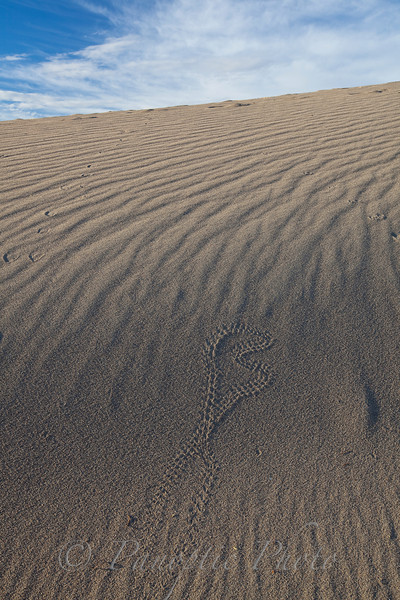 Critter Graffiti in Sand Dunes, Death Valley National Park, California