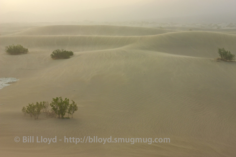 Sand whips across the dunes in a sandstorm.