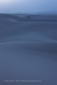 Early morning in the dunes, amid 50 knot winds.