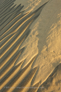 Dune tracks at sunrise, Mesquite Dunes, Death Valley National Park.