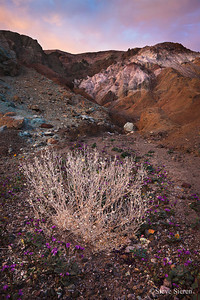 Desert Holly - Death Valley Artist's Palette is a brightly colored patch of sand and rock with pinks, purples, and greens that really leaps out at you against the barren desert landscape.
