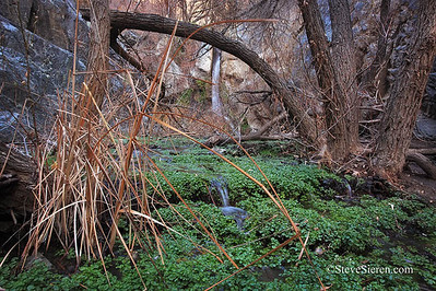Death Valley Green  Ever seen Death Valley so green??? Only green you ever see a photographer shooting in DV is the golf course! There are other waterfalls in Death Valley it just takes a little longer to venture out and find them.  We'll be out there again finding new amazing scenes to photograph in October! (and Nov, Dec, Jan, Feb, Mar, Apr)