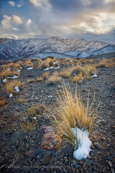 Aguereberry Pt. snow grasses