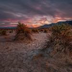 Sunset, Devil's Cornfield, Death Valley NP