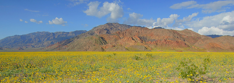 For a few weeks in the early Spring, Death Vally comes alive with flowers. It is a sight to see!