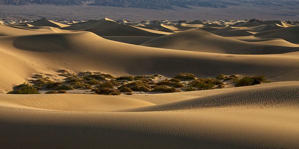 Oasis in the Dunes